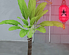 e tropical palmtree