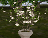 Flower Sakura Tree