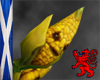 BaBy Corn Pet