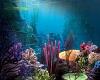 Aquarium Wall 2
