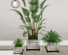 CD Serene Plant