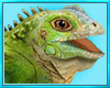 Iguana Play Lizard