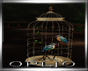 Romance-Night(Bird-Cage)