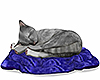 gray cat /blue blanket