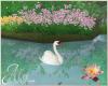 Water Lilies Swan