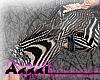 Long zebra black