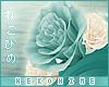 [HIME] Janu Hip Roses