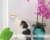 !Ⓜ calico kitty