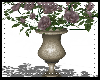 wedd plant rose