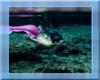 Blk Mermaid Mineral Bath