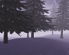 Toxic Pine Trees