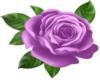 Rose Fox Tattoo