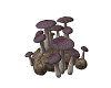 Mushrooms and Rock