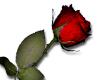 Gothic Burnt Rose