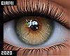 Mesh Eyes | Acorn