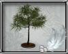 SALON TREE