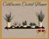 CCH Shelf Plants