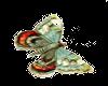 grn butterfly 2