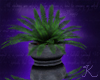Potted Fern R