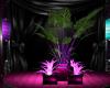 (M) Pink Club Plant 2