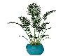 furnn plant