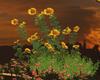 Flower/sunflower