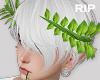 R. Leaf crown