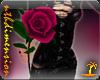 Valentine Love Rose