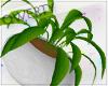 !Q! Potted Plant V6