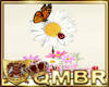 QMBR LadyBug Daisies