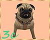 [3c] Pug Dog Pet