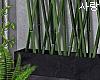e bamboos
