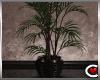Lussuria Plant
