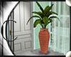 .:C:. Capri plant2