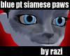 Blue Point Siamese Paws
