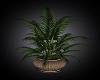 ~MG~ Tropcial Plant