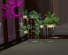 Indoor Plantes