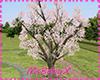 [1V4] Cherry tree White
