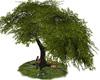HARMONY TREE PICNIC  (KL