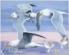 Wedding Seagulls