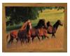 (M)Running Horses Pic 2
