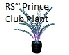 Prince Club Plant~RS