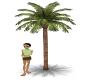 Basic Palm Tree-anim