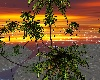 Skys Tropical Island