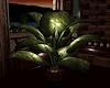 (PT) BIKERL. Plant