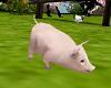 Pet Piglet