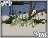 *MV* Reed Plants