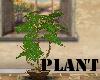 (A)Plant~Fern