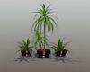 Nelson Planter Trio
