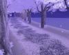 Winters Evening Walk